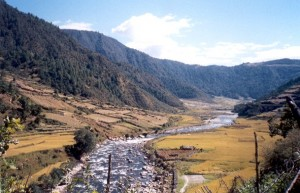 Dirang Valley,Famous for its apples,started kiwi cultivation