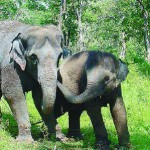 Kaundinya Wildlife Sanctuary