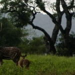 Anamalai Wildlife Sanctuary